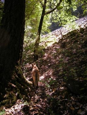 024 Fairie Trail