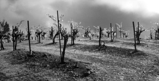 jenjoycedesign©high mountain vineyard