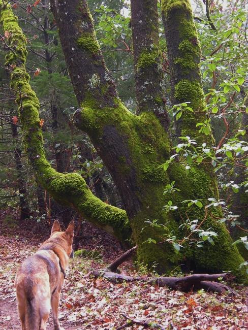 jenjoycedesign©Emma-big-mossy-oak