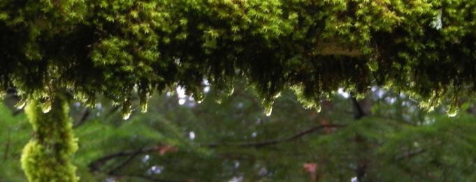 jenjoycedesign©moss-dripping