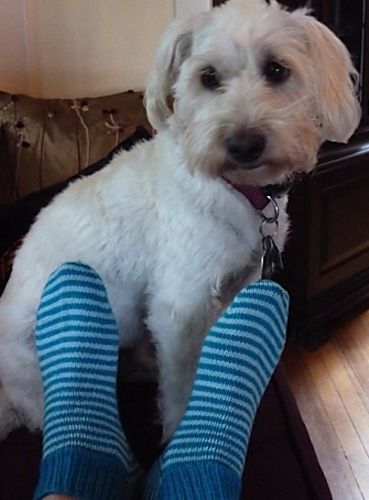 Penny Candy Socks & Peggy