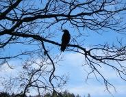 jenjoycedesign©mr-raven