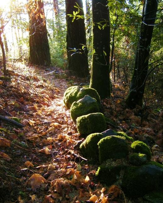 jenjoycedesign©forest-trail