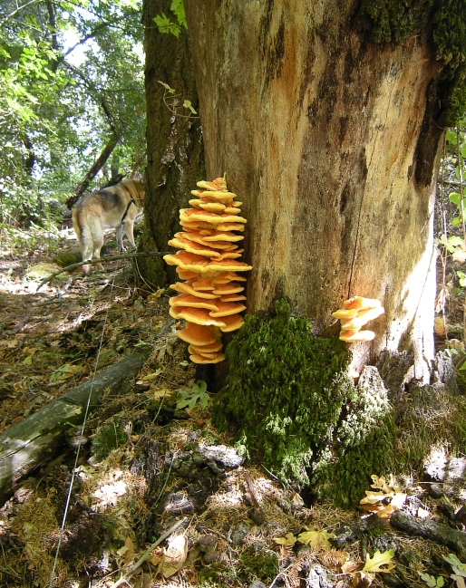 jenjoycedesign©fungus in woods