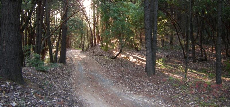 jenjoycedesign©the woods