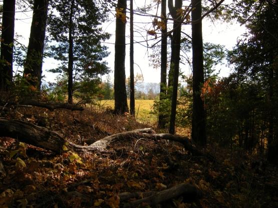 jenjoycedesign© November Landscape 5