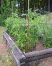 jenjoycedesign© tomatoes