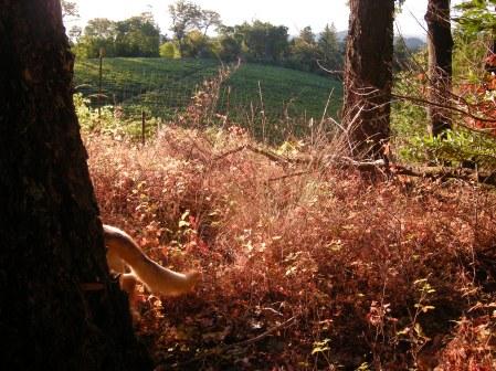 jenjoycedesign-autumn-equinox-8