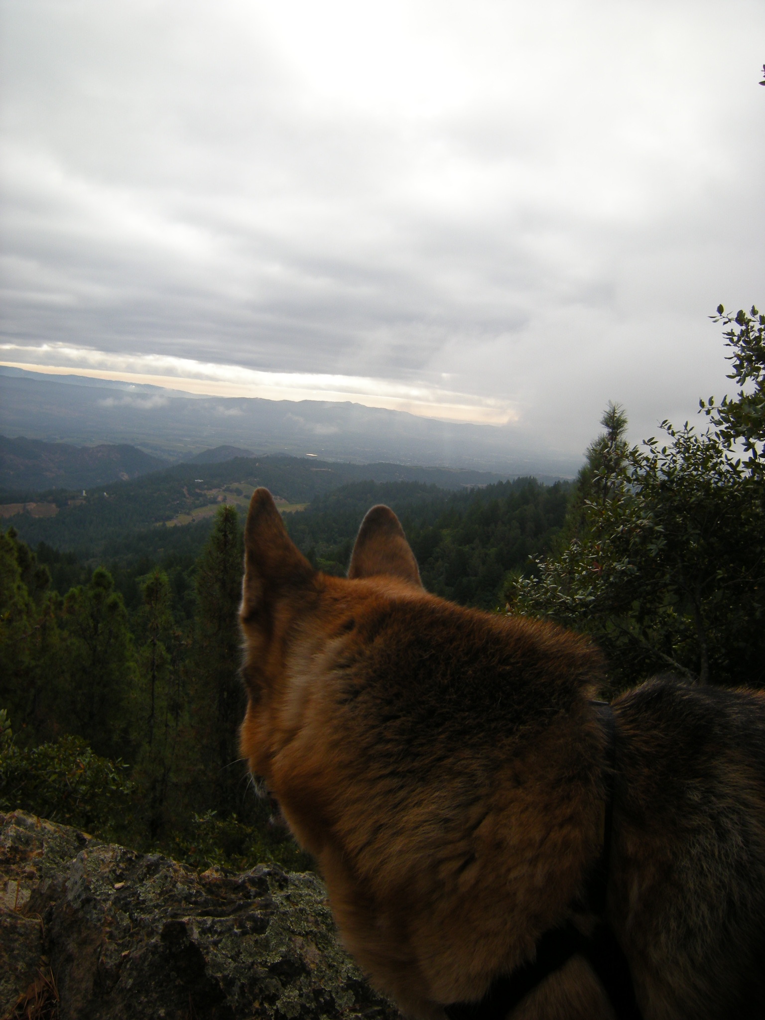 jenjoycedesign-emma-at-peak