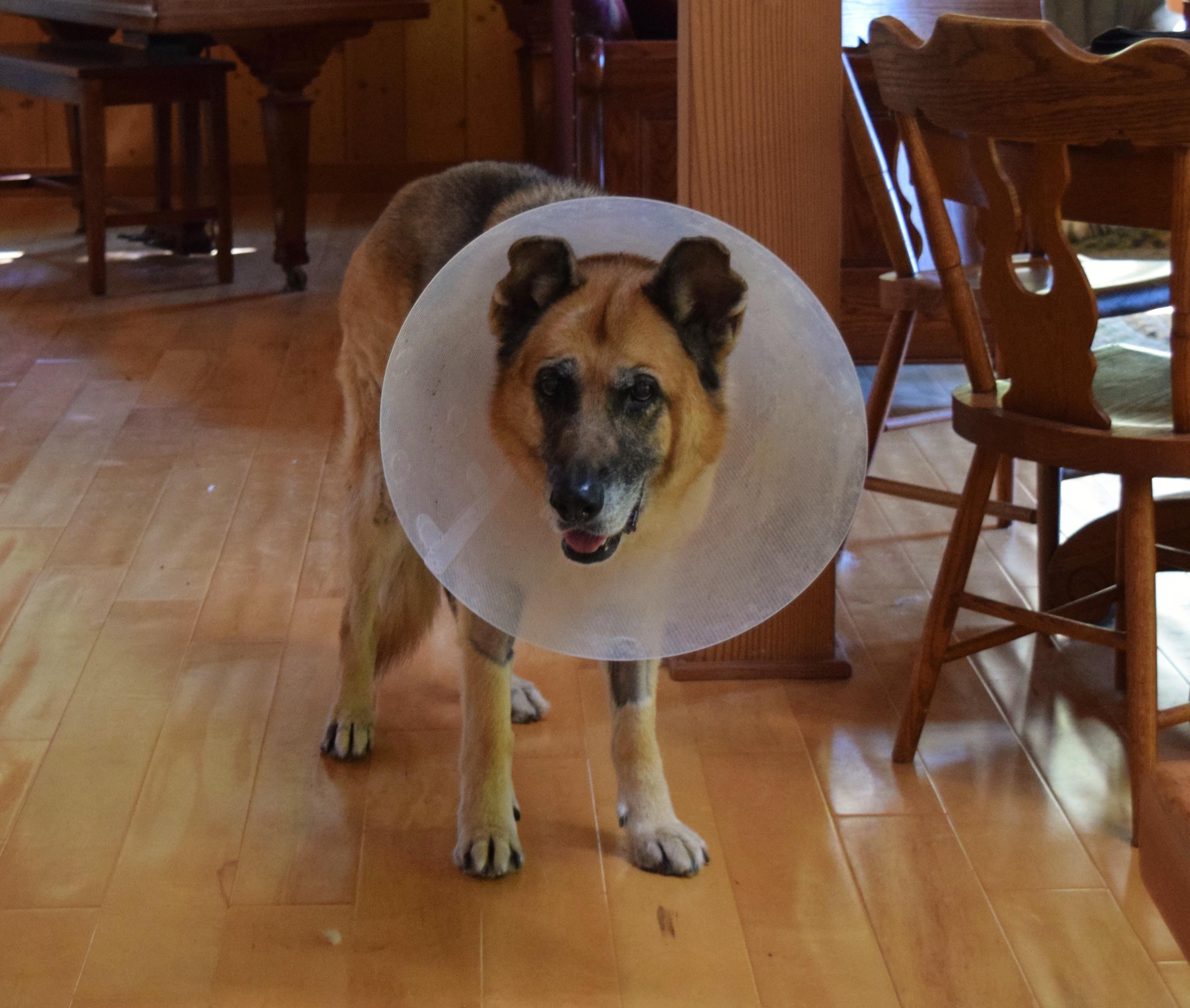 Emma in the cone