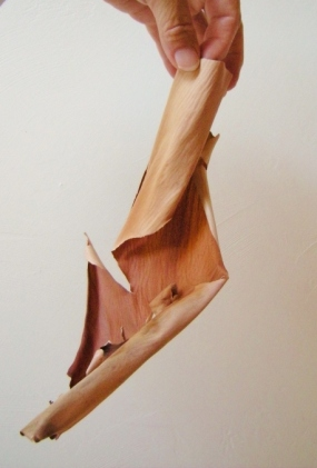 jenjoycedesign-madrone