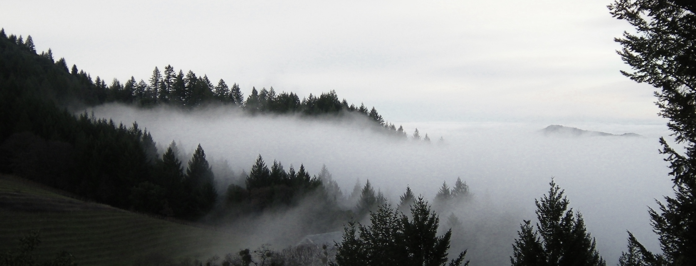 jenjoycedesign© fog Jan 2015