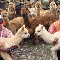 The Textiles of Cusco