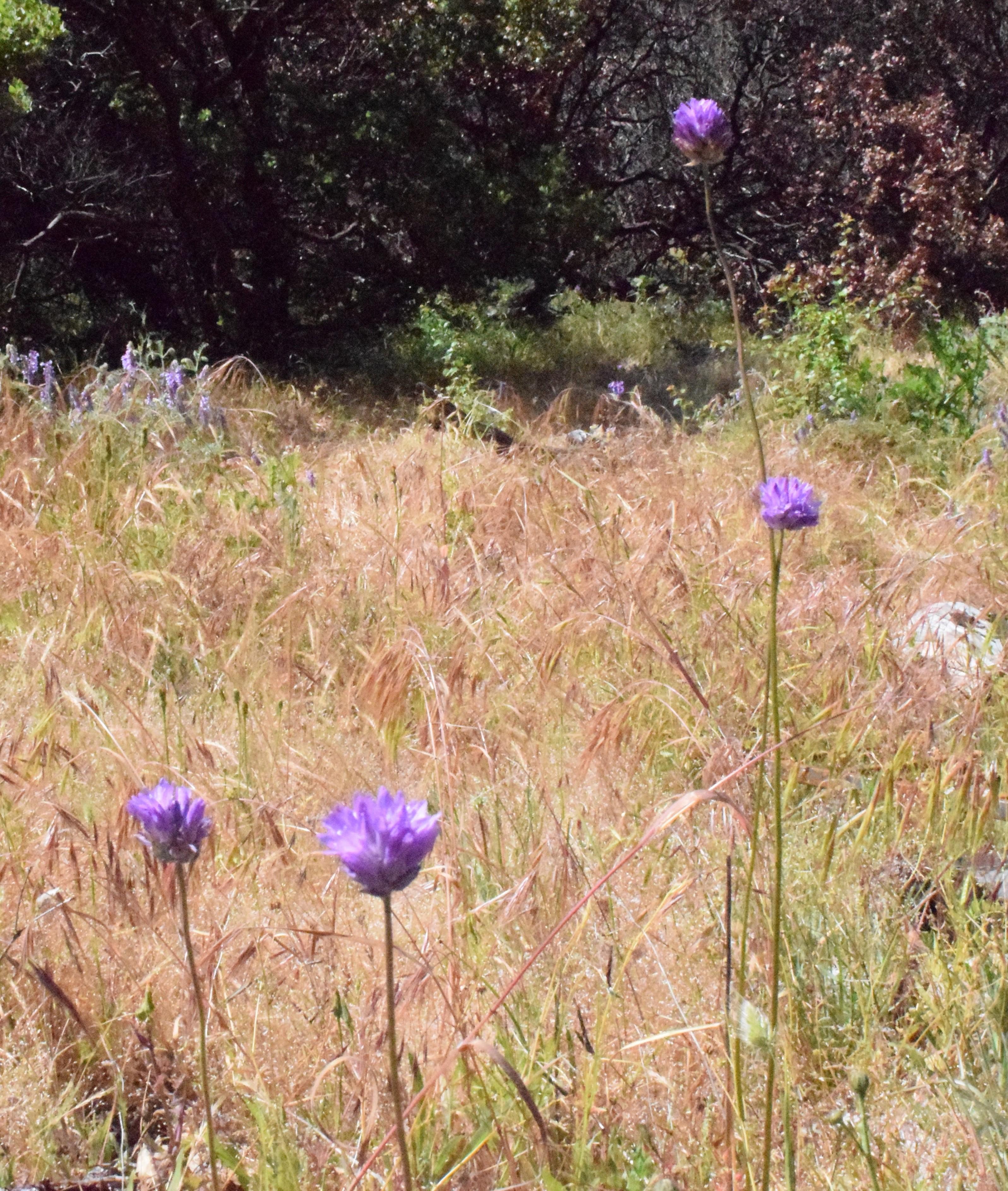 jenjoycedesign© brodea flowers