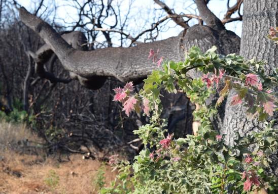 jenjoycedesign© black oak shoots