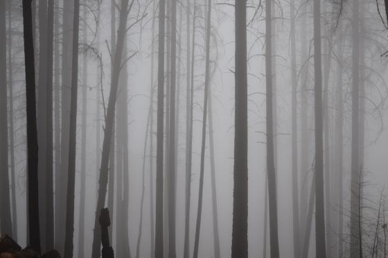 jenjoycedesign©outside in the fog