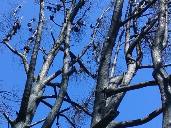 jenjoycedesign© burned pine