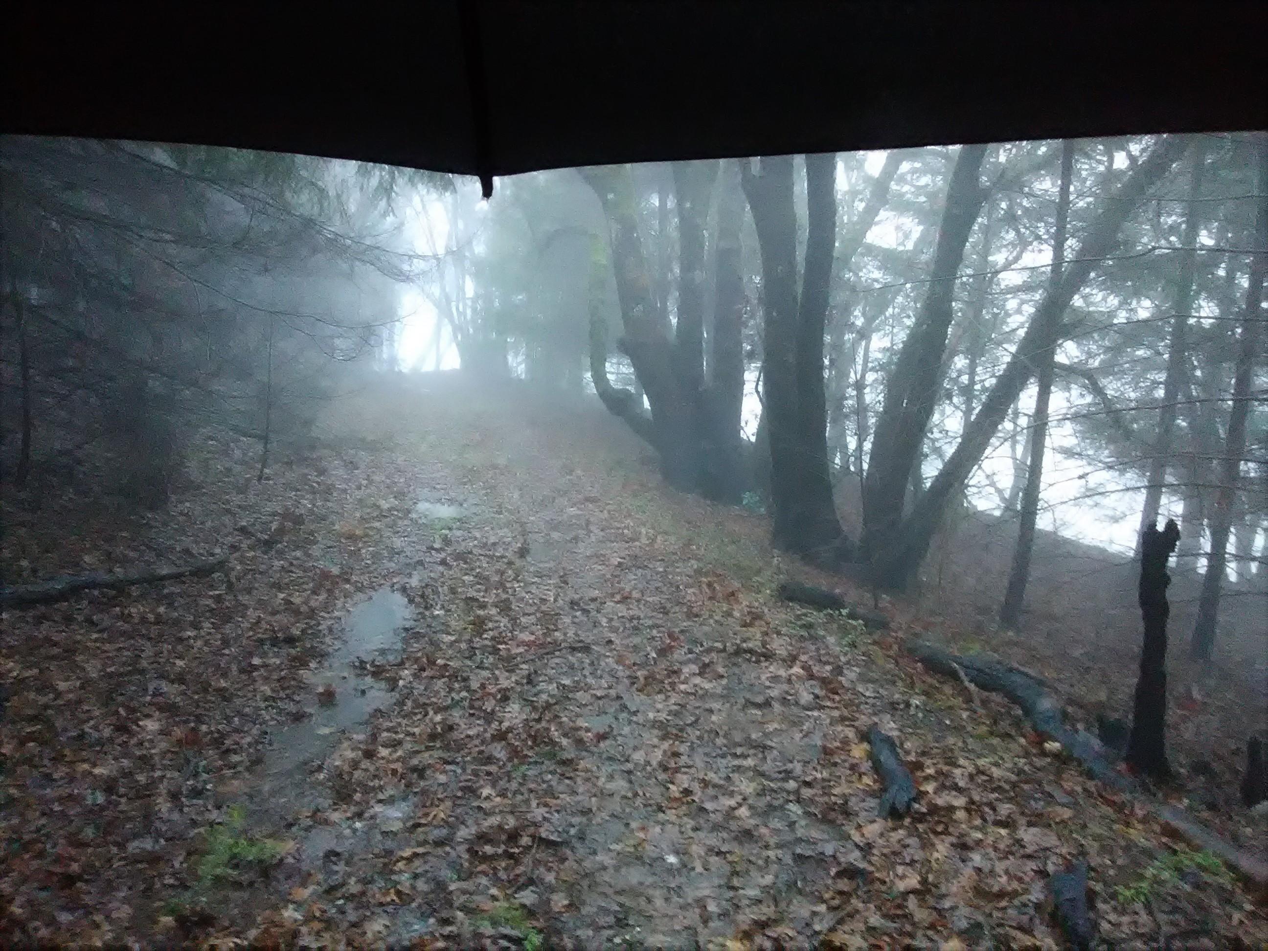 jenjoycedesign© rain walk 2 (2).jpg