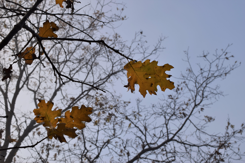 jenjoycedesign© Autumn walk 2