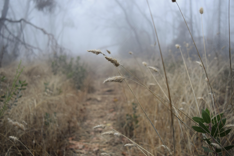 jenjoycedesign© Autumn walk 5