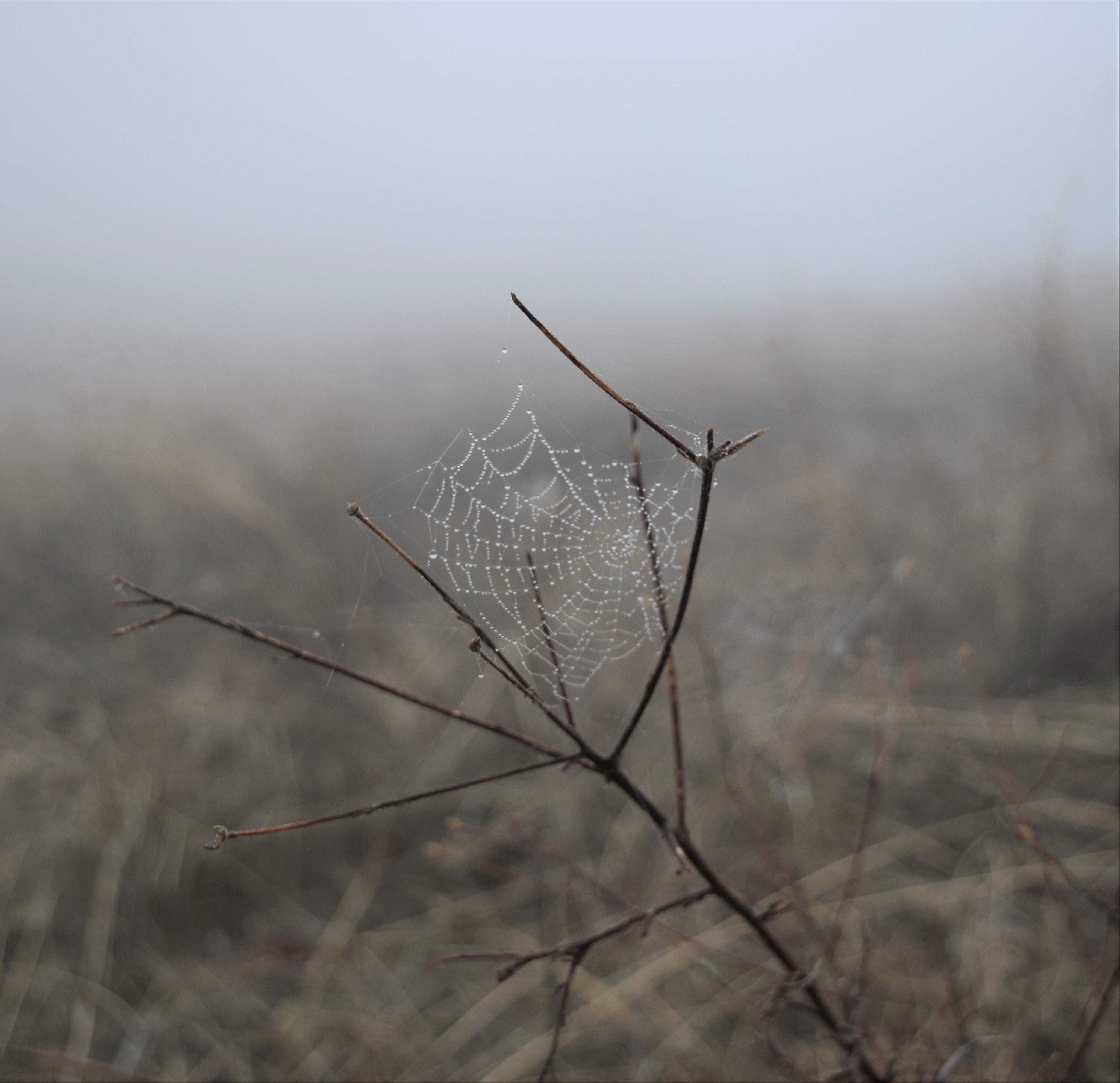 jenjoycedesign© Autumn walk 8