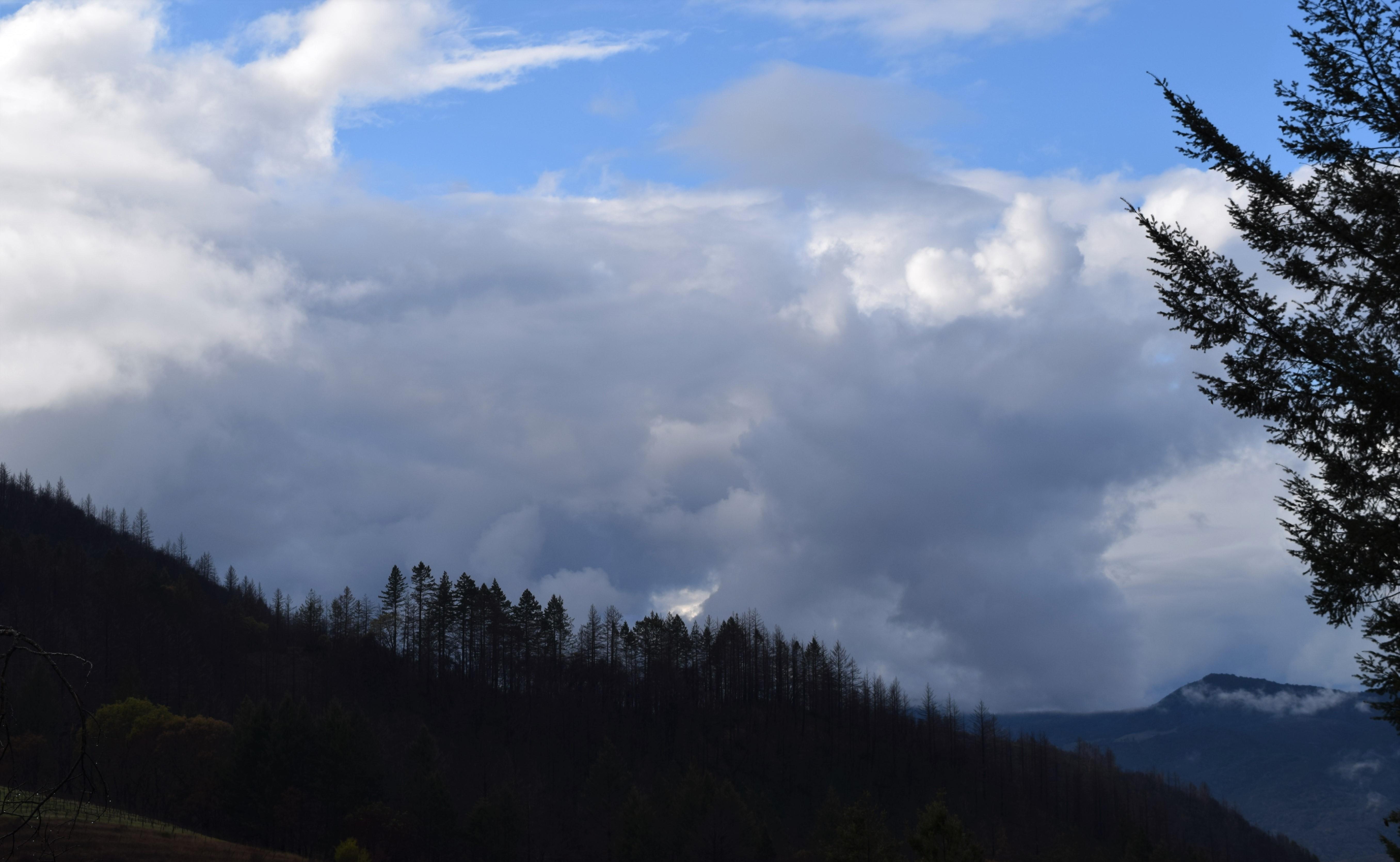 jenjoycedesign© weathering 4.38